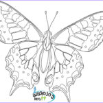 Coloring Butterflies Best Of Photos Butterfly Coloring Pages
