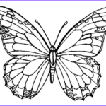 Coloring Butterflies Cool Stock Monarch Butterfly Coloring Page & Coloring Book Adult