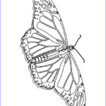 Coloring Butterflies New Collection Free Printable Butterfly Coloring Pages For Kids