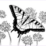 Coloring Butterflies New Image Swallowtail Butterfly Coloring Page Samantha Bell