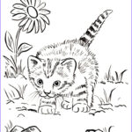 Coloring Cats Luxury Photos Kitten Coloring Page Art Starts For Kids