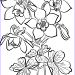 Coloring Fans Inspirational Stock Fan Columbine Coloring Page