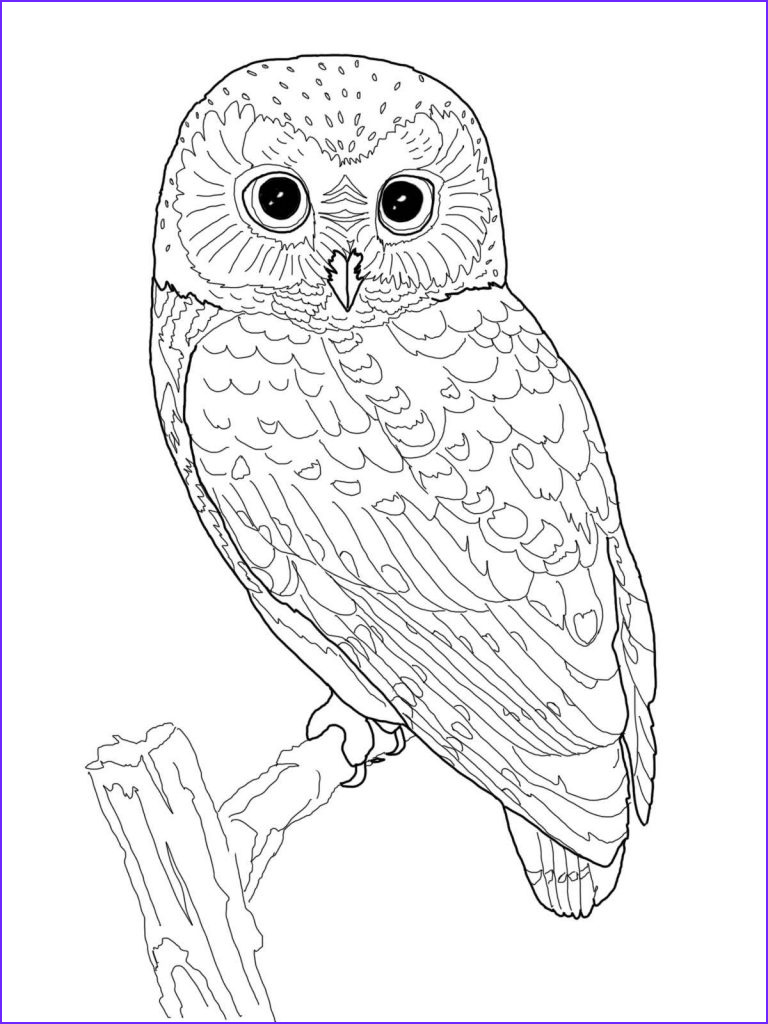 Coloring Images for Adults Beautiful Photos Owl Coloring Pages for Adults Free Detailed Owl Coloring