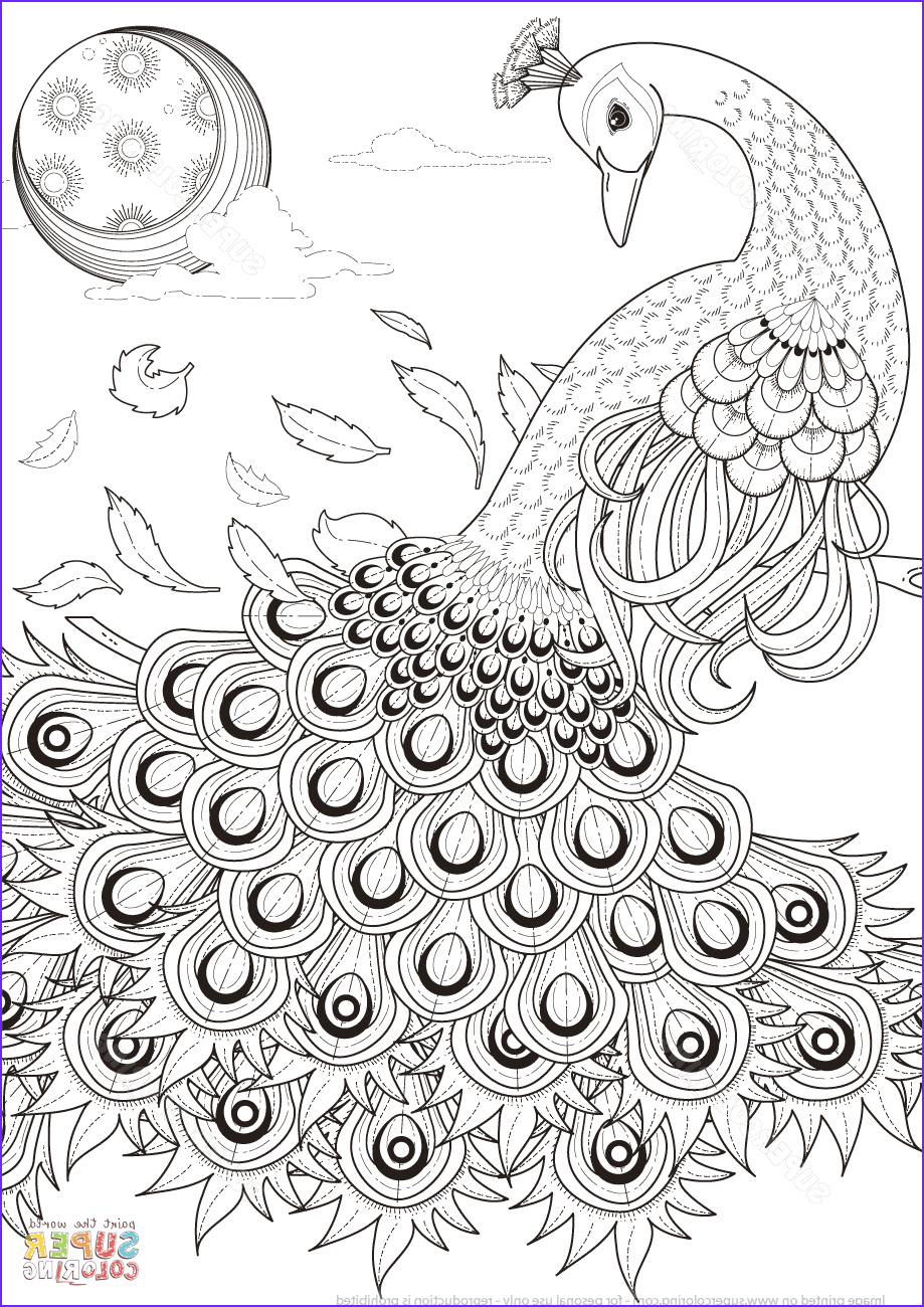 Coloring Images for Adults Elegant Photos Peacock Coloring Pages for Adults Coloring Home