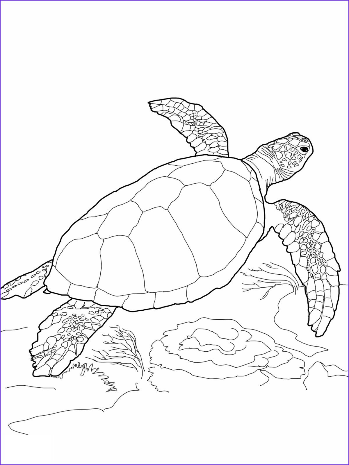 Coloring Page Turtle Awesome Photography Free Printable Turtle Coloring Pages for Kids