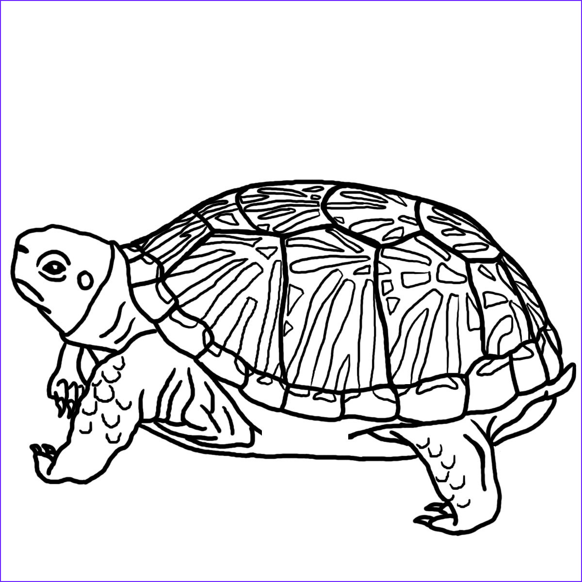 Coloring Page Turtle Cool Photos Free Printable Turtle Coloring Pages for Kids