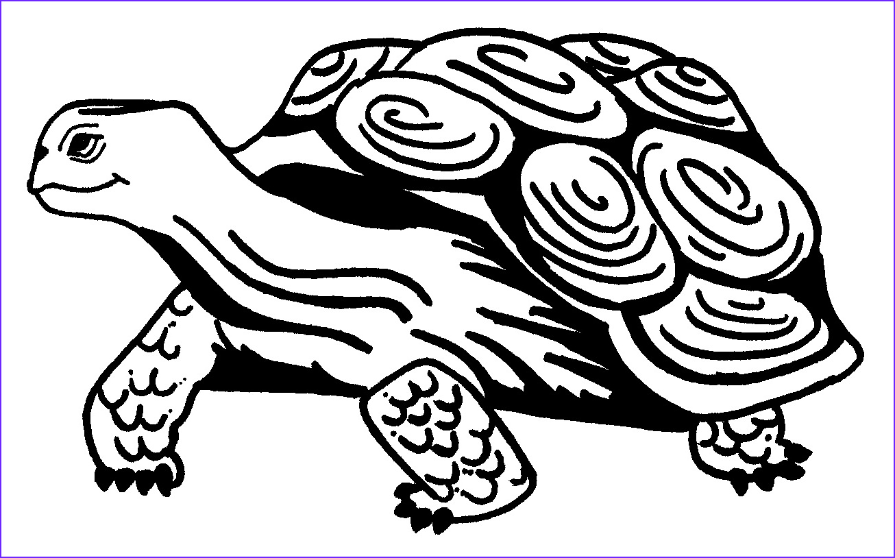Coloring Page Turtle New Photography Free Printable Turtle Coloring Pages for Kids