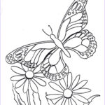 Coloring Pages Butterfly Beautiful Photos Coloring Pages For Kids By Mr Adron Butterfly Coloring