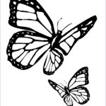 Coloring Pages Butterfly Cool Gallery Butterfly Coloring Pages