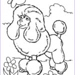 Coloring Pages Com Inspirational Stock Poodle Coloring Pages Poodle Coloring Pages Poodle Skirt