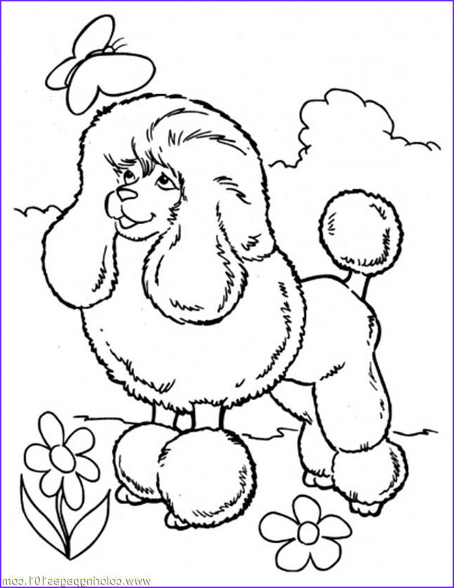 poodle coloring pages poodle coloring pages poodle skirt coloring page