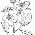 Coloring Pages For Adults Flowers Elegant Gallery 10 Floral Adult Coloring Pages The Graphics Fairy