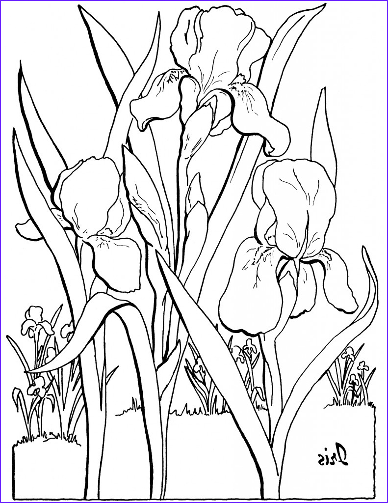 Coloring Pages Printable Adults Best Of Photos 10 Floral Adult Coloring Pages the Graphics Fairy
