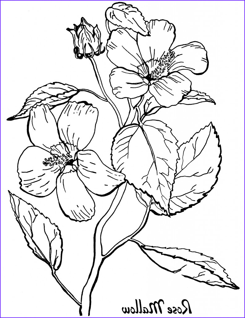 free roses printable adult coloring page