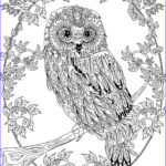 Coloring Pages Printable Adults Unique Collection Owl Coloring Pages For Adults Free Detailed Owl Coloring