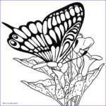 Coloring Pages To Print For Kids Awesome Photos Printable Butterfly Coloring Pages For Kids