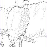 Coloring Pages To Print For Kids Luxury Photos Free Printable Eagle Coloring Pages For Kids
