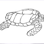 Coloring Pages Turtles Awesome Images Free Printable Turtle Coloring Pages For Kids