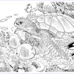 Coloring Pages Turtles Awesome Photos Sea Turtle Colored Pencil Tutorial Lachri Fine Art