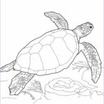 Coloring Pages Turtles Beautiful Collection Free Printable Turtle Coloring Pages For Kids