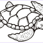 Coloring Pages Turtles Beautiful Photos Free Turtle Outline Download Free Clip Art Free Clip Art