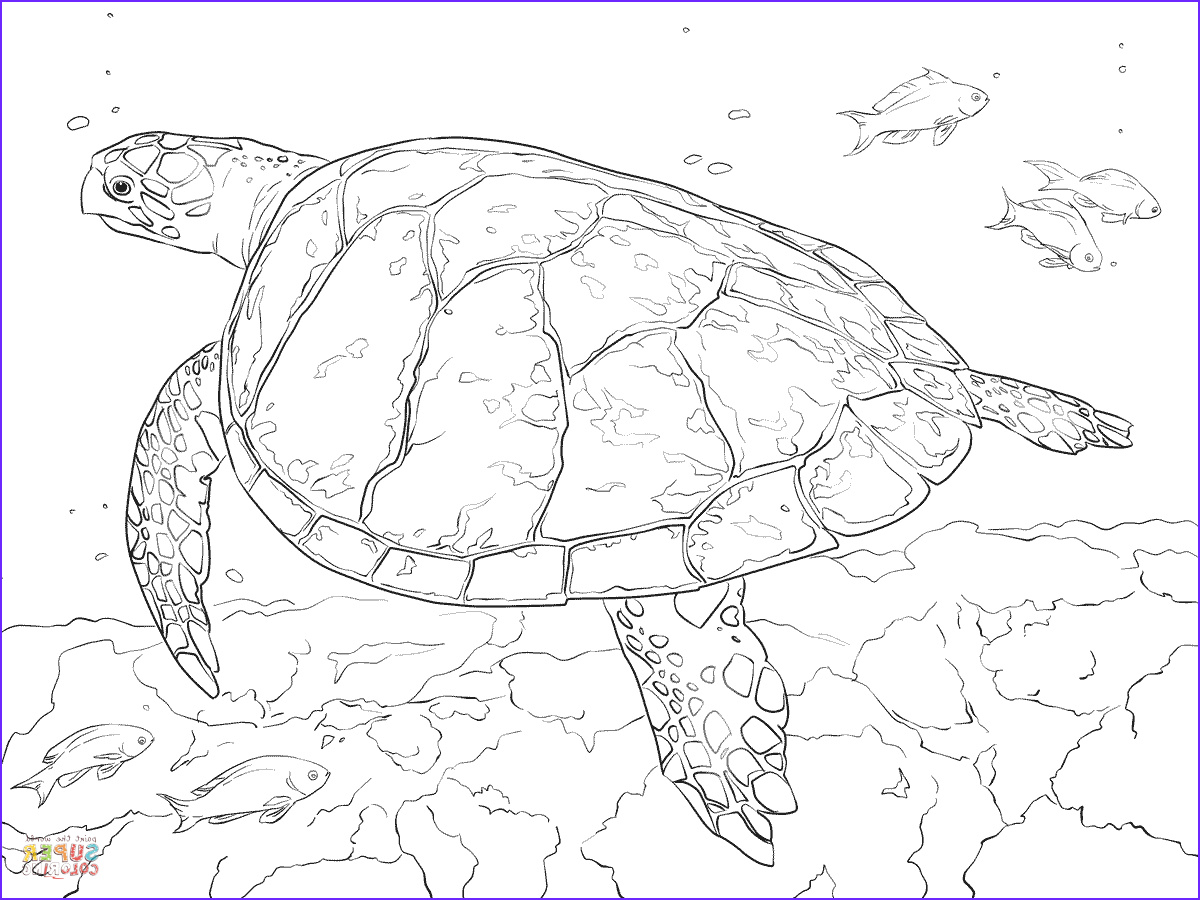 Coloring Pages Turtles Beautiful Photos Realistic Hawksbill Sea Turtle Coloring Page