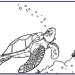 Coloring Pages Turtles Elegant Image Free Printable Turtle Coloring Pages For Kids