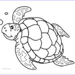 Coloring Pages Turtles Inspirational Photography Printable Sea Turtle Coloring Pages For Kids