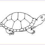 Coloring Pages Turtles Unique Image Turtle Outline Printable Google Search