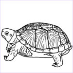 Coloring Pages Turtles Unique Stock Free Printable Turtle Coloring Pages For Kids