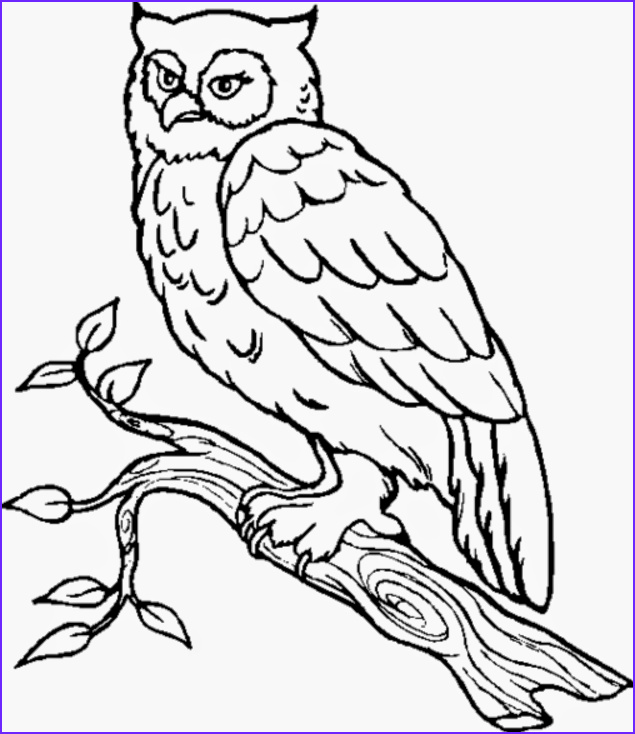 Coloring Picture Of Owls Elegant Image Owl Coloring Pages All About Owl