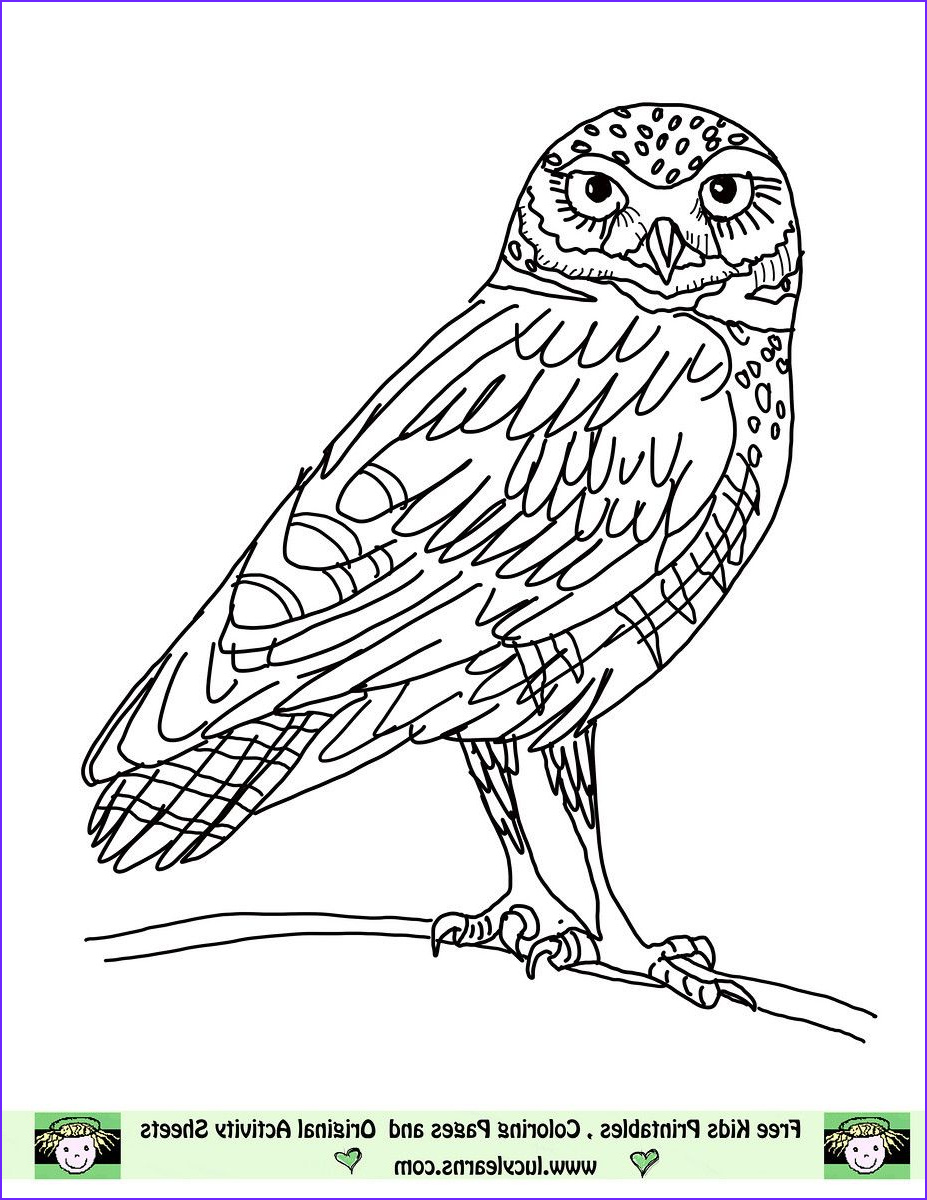 Coloring Picture Of Owls Inspirational Collection Owl Coloring Pages Free Printables
