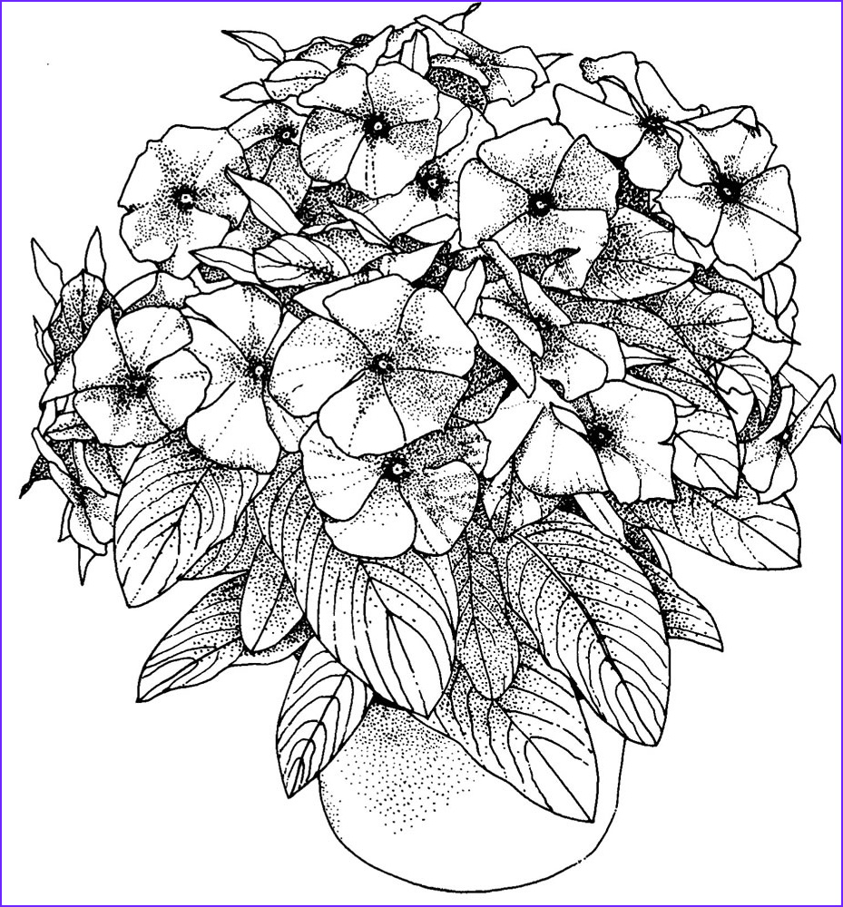 Coloring Pictures for Adults Beautiful Photography Flower Coloring Pages for Adults Best Coloring Pages for