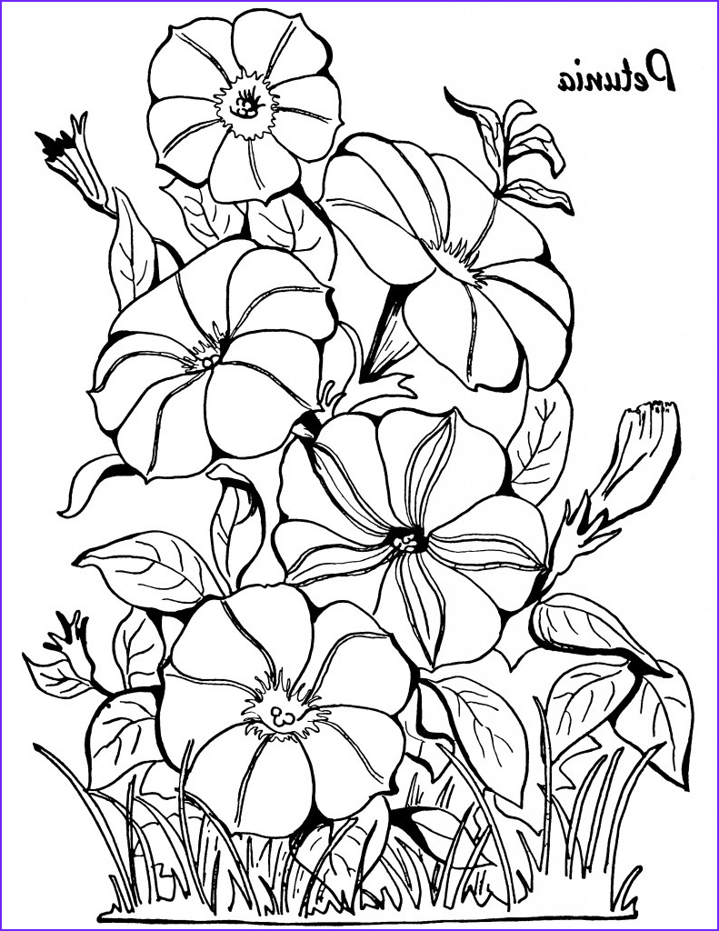 adult coloring page petunias
