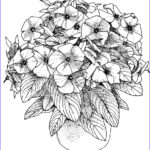 Coloring Pictures Of Flowers Beautiful Image Flower Coloring Pages For Adults Best Coloring Pages For