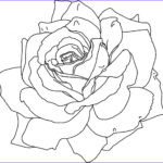 Coloring Pictures Of Flowers Cool Stock Free Printable Flower Coloring Pages For Kids Best