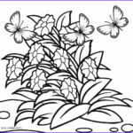 Coloring Pictures Of Flowers Cool Stock Free Printable Flower Coloring Pages For Kids