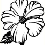 Coloring Pictures Of Flowers New Gallery Free Printable Hibiscus Coloring Pages For Kids