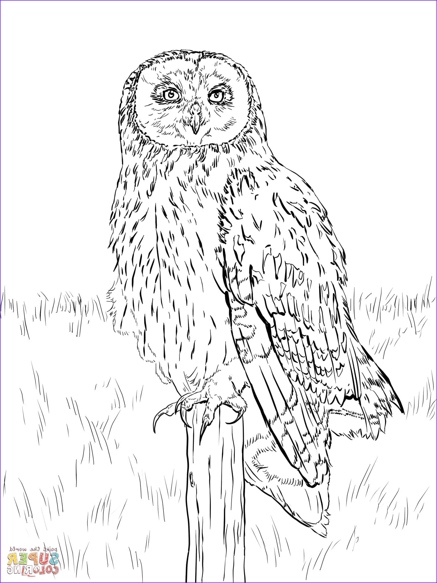 Coloring Pictures Of Owl Luxury Photos Short Eared Owl Coloring Page