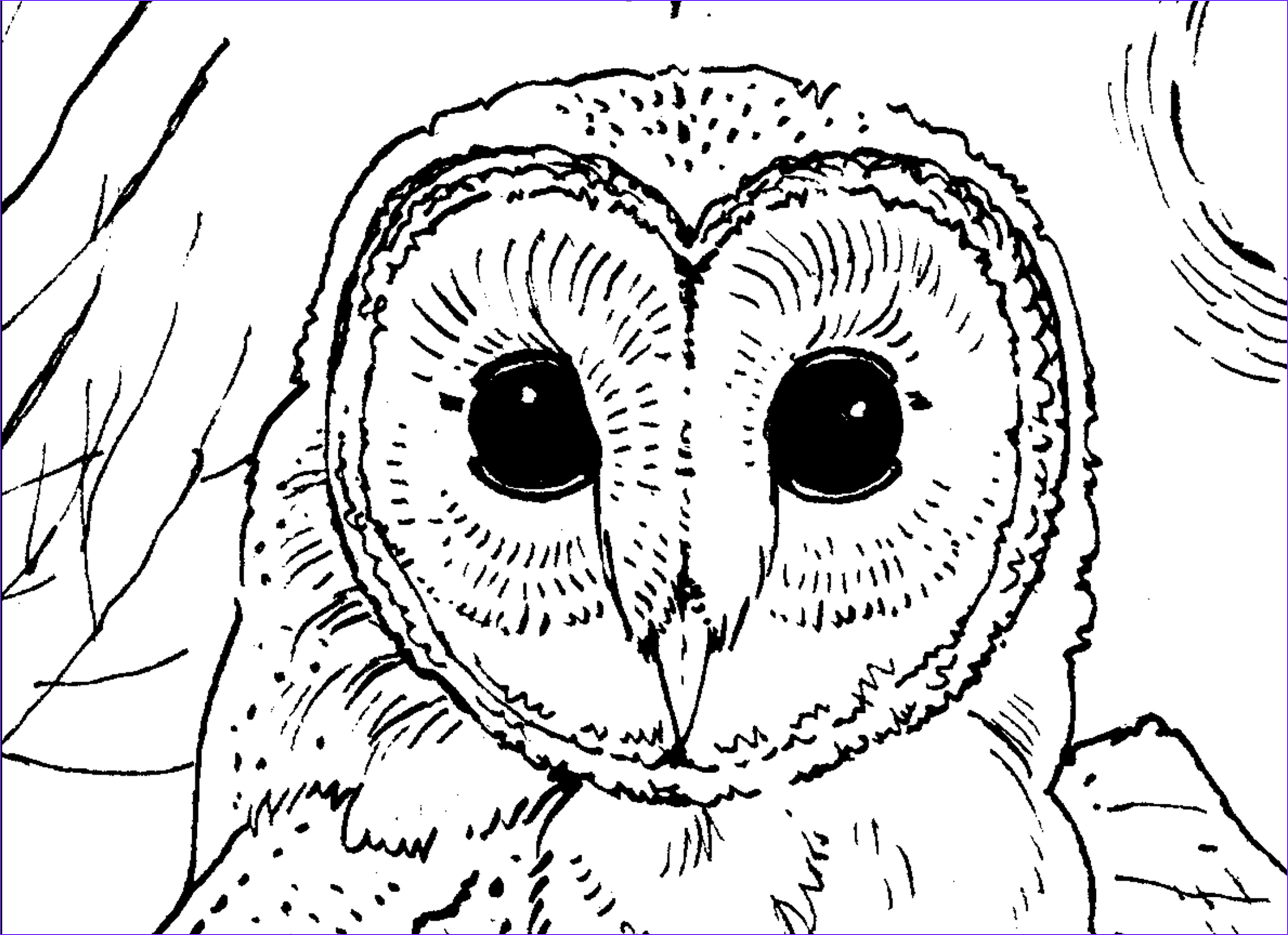 Coloring Pictures Of Owl Unique Images Owl Crafts Owls Rock