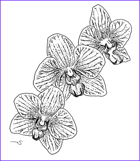 Coloring Pitchers Beautiful Images Coloring Pages for Kids orchid Flower Coloring Page