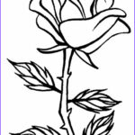 Coloring Roses Beautiful Stock Printable Rose Coloring Pages For Kids