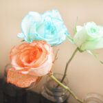 Coloring Roses Cool Gallery How To Dye White Roses With Food Coloring 8 Steps With