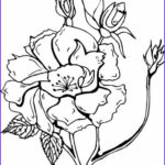 Coloring Roses Cool Gallery More Roses Coloring Pages