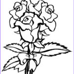 Coloring Roses Cool Photos Coloring Pages For Kids Rose Coloring Pages