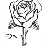 Coloring Roses Cool Photos Free Printable Roses Coloring Pages For Kids