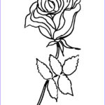 Coloring Roses Cool Photos Ly Roses Coloring Pages