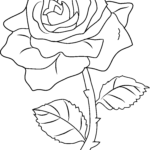 Coloring Roses Unique Collection Rose Color Clipart 20 Free Cliparts