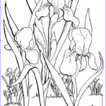 Coloring Sheets For Adults Flowers Cool Collection 7 Floral Adult Coloring Pages The Graphics Fairy
