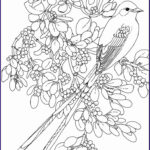 Coloring Sheets For Adults Flowers Luxury Photos 2965 Best Images About Coloring Flowers On Pinterest